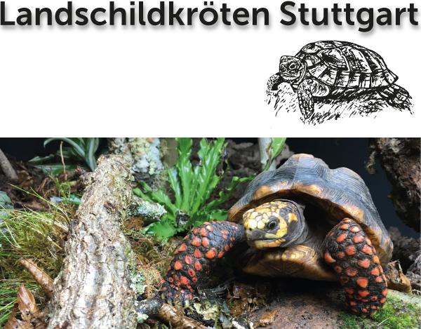 Headerbild Landschildkröten Newsletter